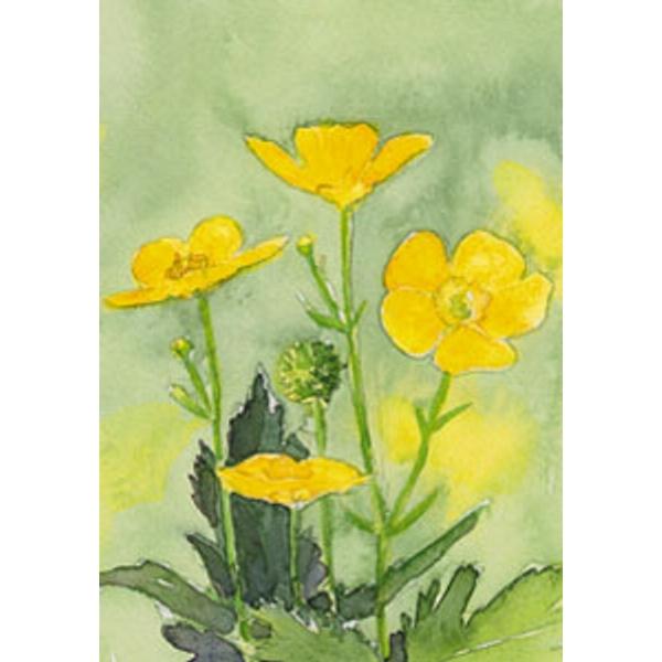 Afbeeldingsresultaat voor boterbloem painting